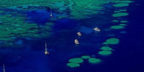 Bait Reef