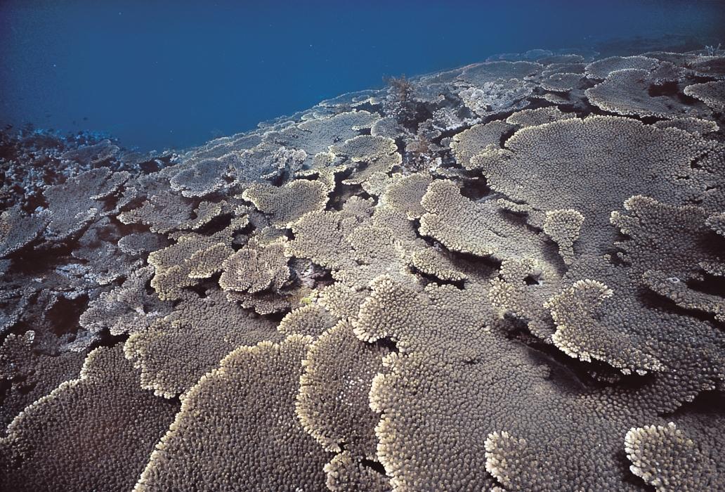 ABROLHOS ISLANDS 6