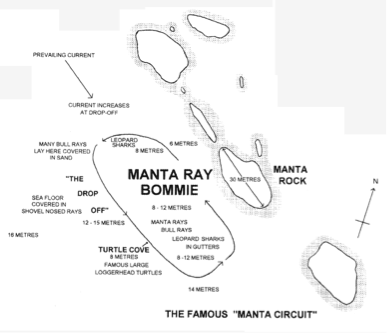 MANTA RAY BOMMIE 3