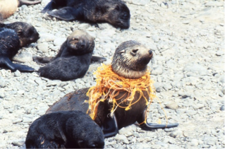 MONTAGUE SEAL COLONY 3
