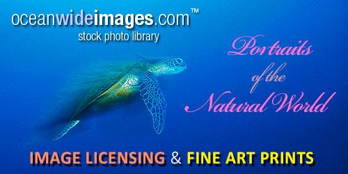 ocean-wide-images